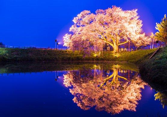 福岡県で桜祭りがある名所はどこ?お花見スポットを調べてみた!