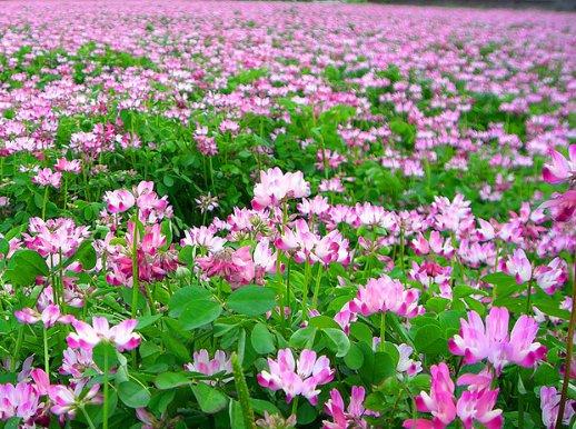 桜以外のお花見ってあるの?花の種類や見どころをチェック!