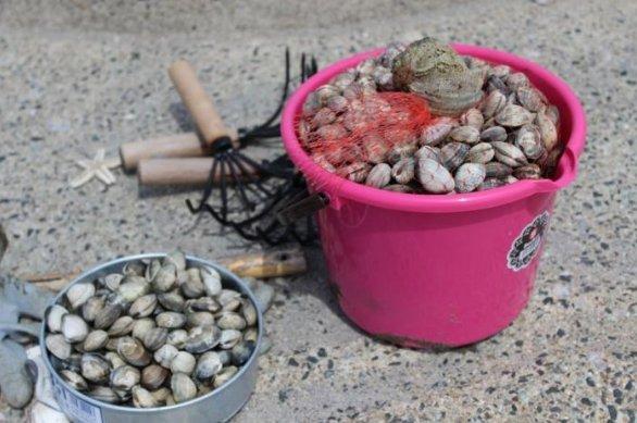 潮干狩りで採れる貝の種類や名前は?食べれない貝の見分け方も!